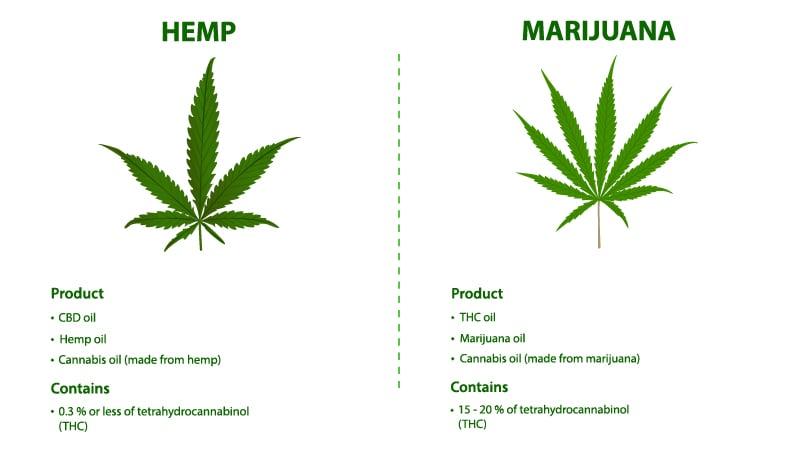 Illustration of Marijuana vs Hemp