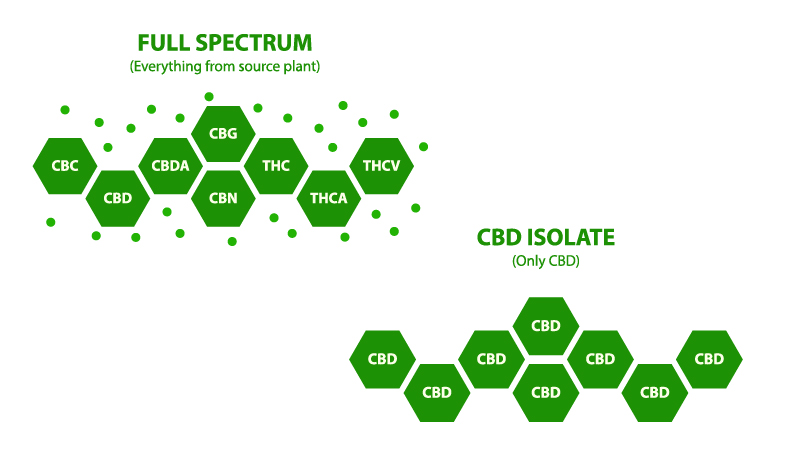 Illustration of Full Spectrum CBD Oil vs Isolate CBD Oil on white background