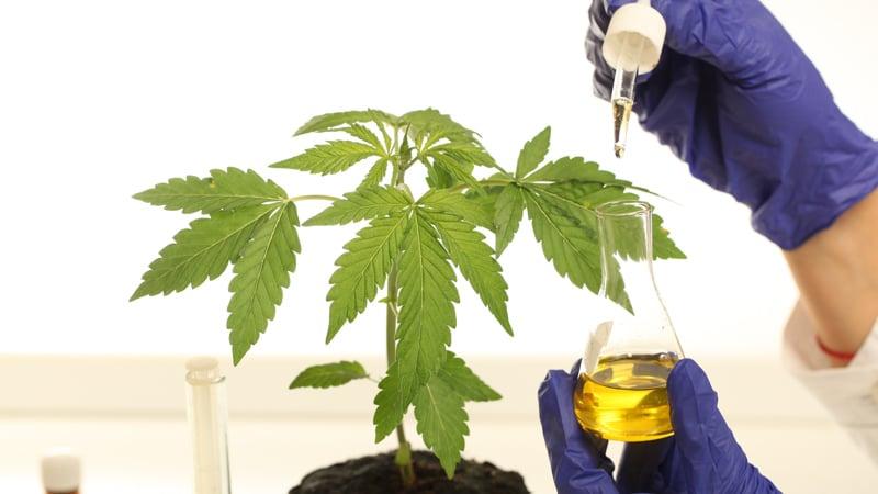 lab testing cbd oil extract