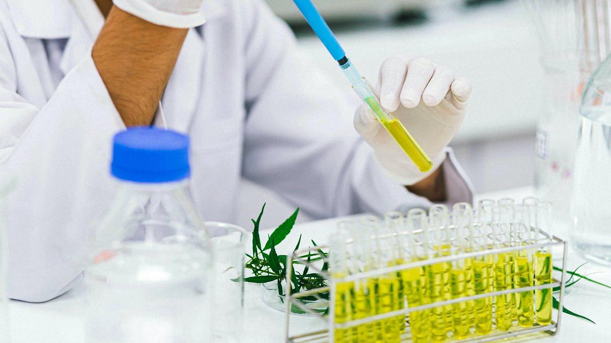 Cannabis CBD Extraction