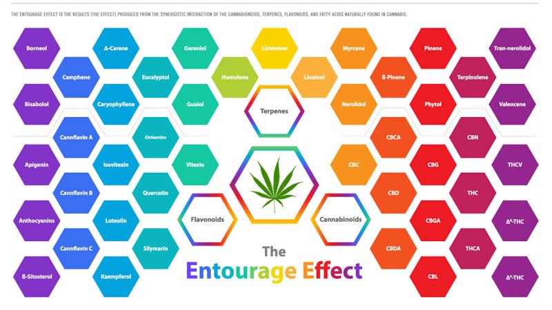 entourage effect in CBD