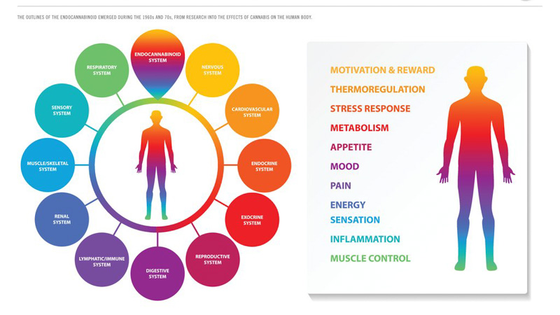 The entourage effect on human's endocannabinoid system