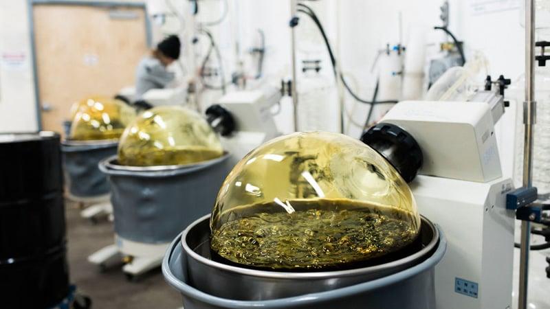 extracting cbd process from hemp
