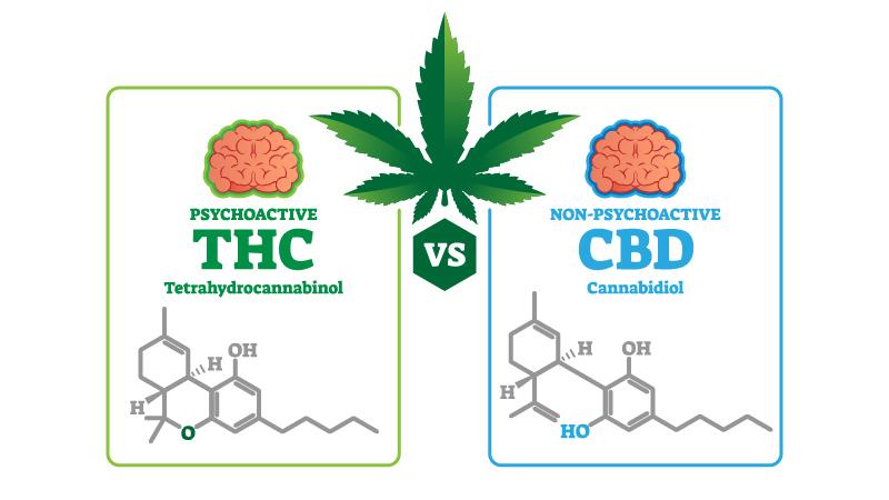 Illustration of CBD vs THC Chemical Structure on white background