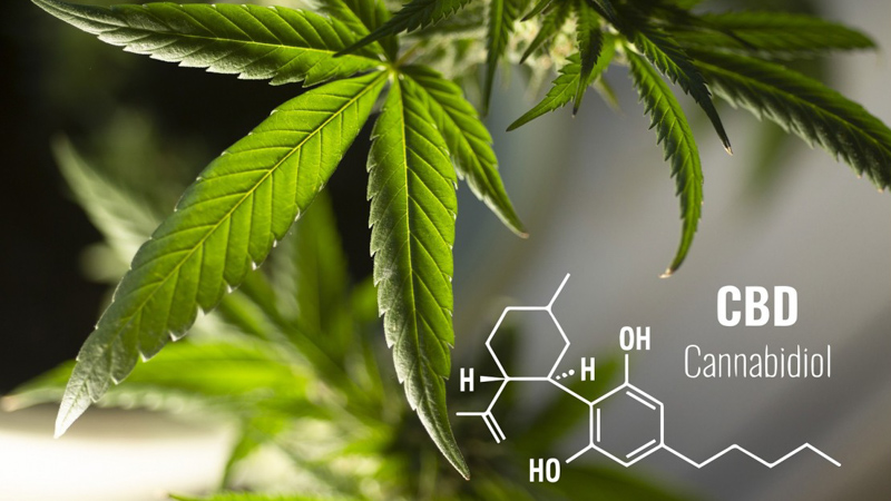 Hemp leaf and CBD Chemistry molecule