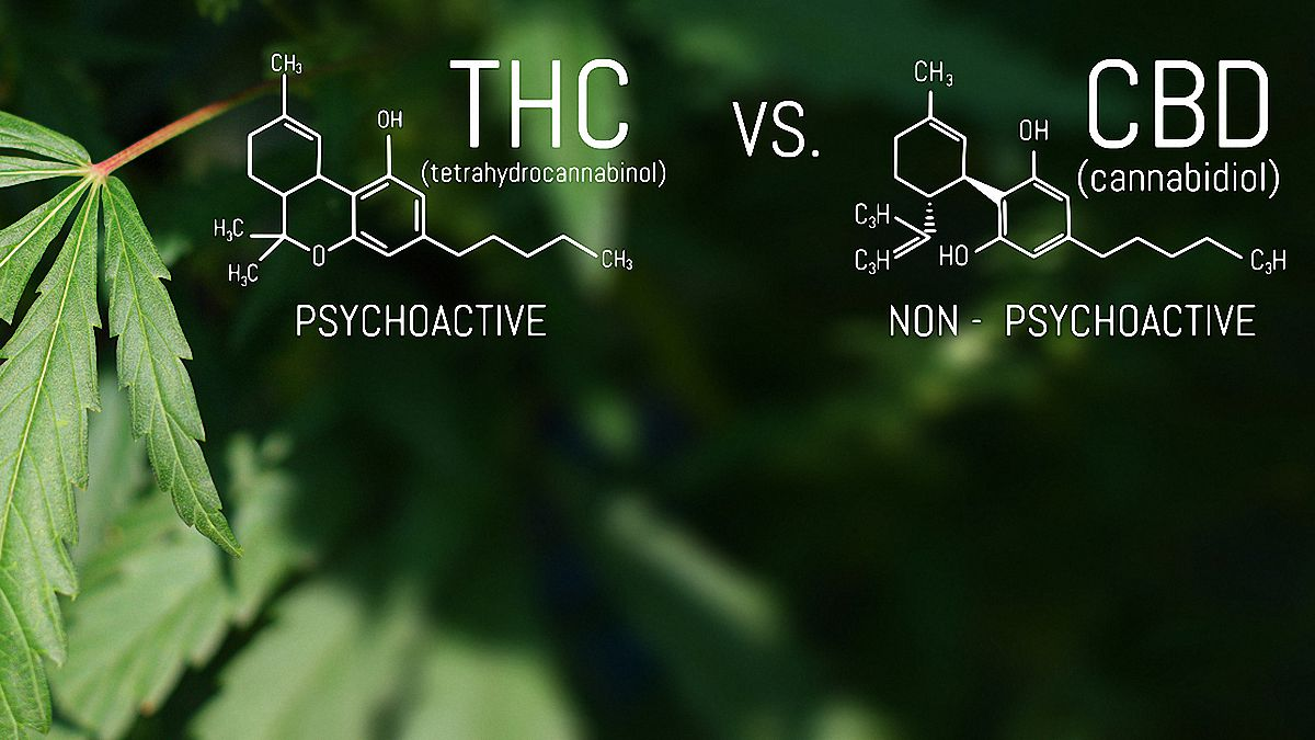 CBD and THC Chemical Structure with hemp leaf in the background