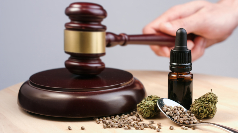 Hemp flowers, oil, and seeds and judges gavel