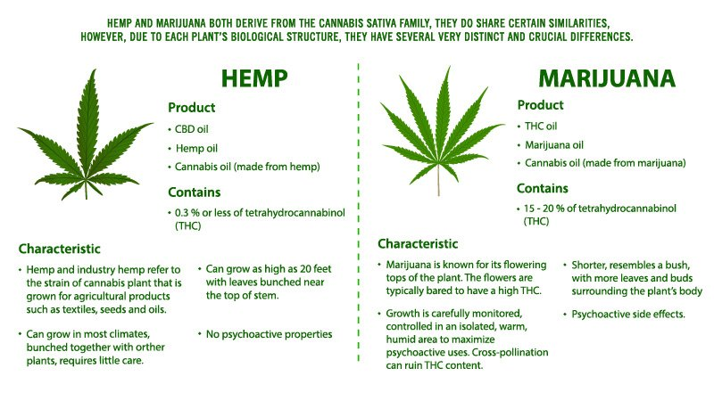 Illustration of Hemp Vs Marijuana