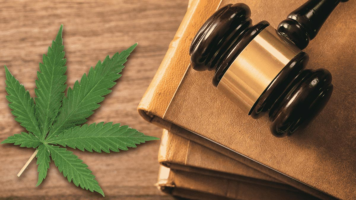 A gavel on top of books and hemp leaf on wooden table