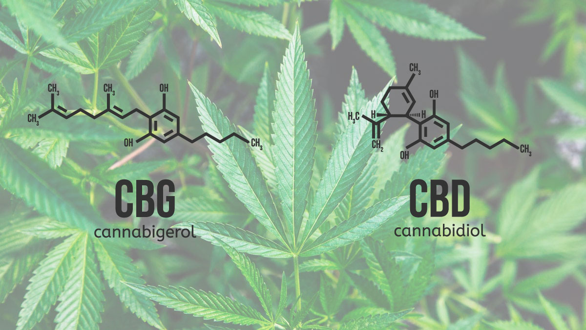 Illustration of CBD and CBG molecules on hemp leaf background